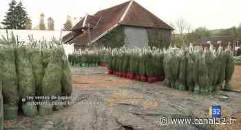 Canal 32 - Bercenay-en-Othe : les ventes de sapins autorisées durant le confinement - Canal 32