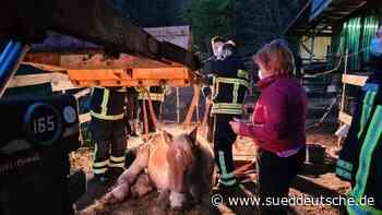 Feuerwehr hilft Pferd wieder auf die Beine - Süddeutsche Zeitung