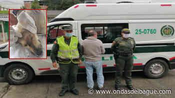 Fiscalía imputó delitos contra dos maltratadores de animales en Herveo y Alvarado - Ondas de Ibagué