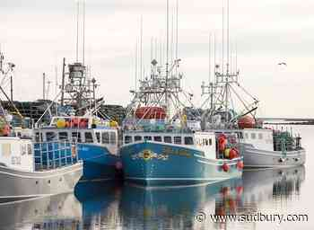 'Not good': Ocean advocacy group criticizes Canadian fishery management in audit