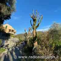 Recco, al via i lavori di potatura nella frazione di Megli - Radio Aldebaran Chiavari