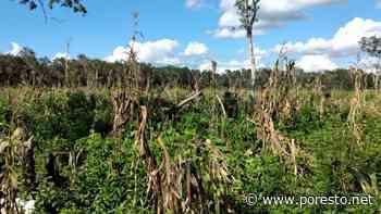Piden apoyos para recuperarse tras desastres naturales en Tulum - PorEsto