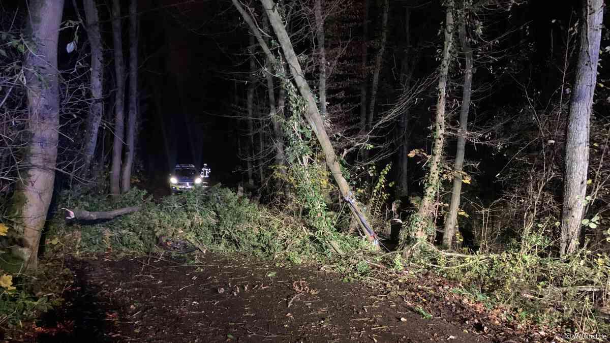 Unglück in Haan (NRW): Junge (12) unter 25-Meter-Baum begraben - Feuerwehr befreit ihn - RTL Online