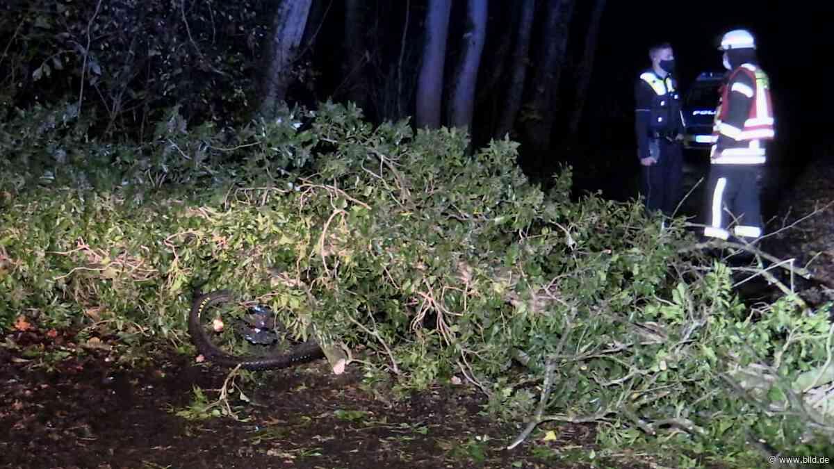 Kind in Haan (NRW) lebensgefährlich verletzt - Umstürzender Baum begräbt Jungen (12) - BILD