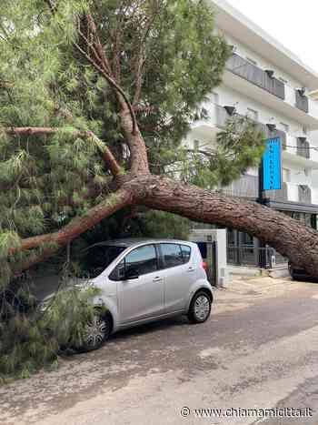 Riccione, cade grosso pino in Viale Carducci. Le foto - ChiamamiCittà