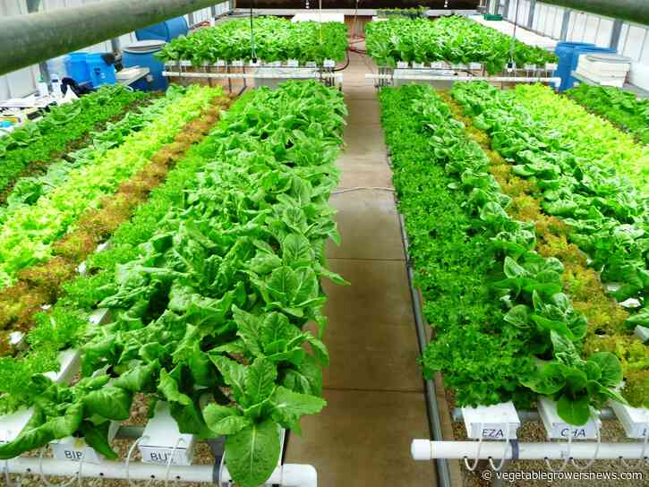 Lettuce losses could cause shortage across US