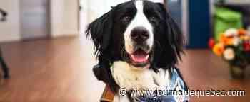 Soins palliatifs pédiatriques: un chien pour accompagner les enfants malades