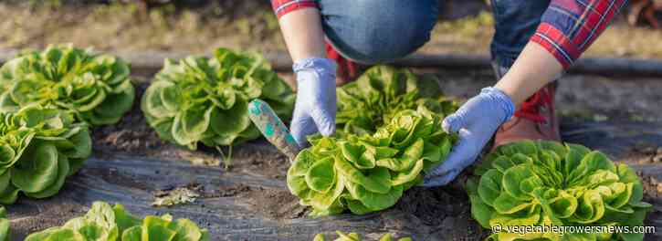 NY farms' growth aided by Produce Traceability Blue Ribbon Task Force