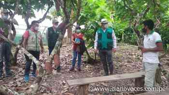 Diseñan ruta agroturística del cacao en Chazuta - Diario Voces
