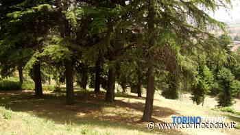 """""""Festa Nazionale dell'Albero"""", lancio online del progetto """"Cuore Verde"""" - TorinoToday"""