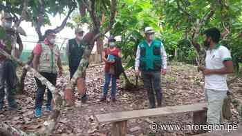 San Martín: Diseñan ruta agroturística del cacao en Chazuta - INFOREGION