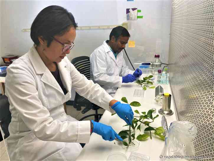Fighting agricultural plant diseases focus of Texas A&M researchers