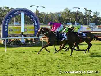 racing news for Nov 17 | Benalla | Grafton | Rockhampton - Horse Betting