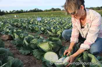 How to Plug Into Virtual Vegetable Seed Trials