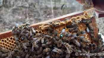 Bienenklau in Bad Urach: Wildkamera entlarvt Dieb - SWP