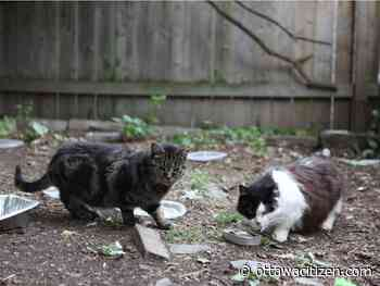 Just purrr-fect: Documentary puts focus on Cornwall's feral cat issue