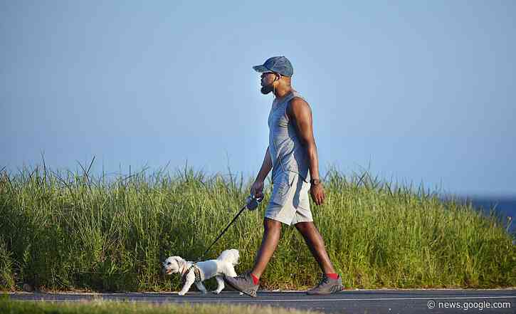 Dog walking increases odds of catching COVID by 78 percent, here's why - CT Post