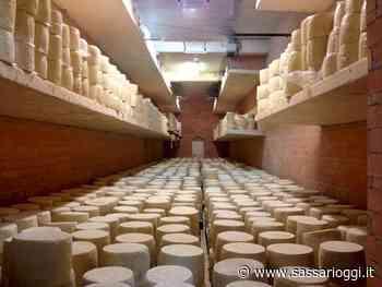Ittiri, il formaggio la fresa diventa un Presidio Slow Food - Sassari Oggi