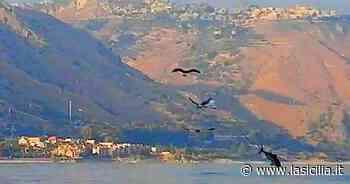 Taormina, il volo dei gabbiani che confidano nel tonno - La Sicilia
