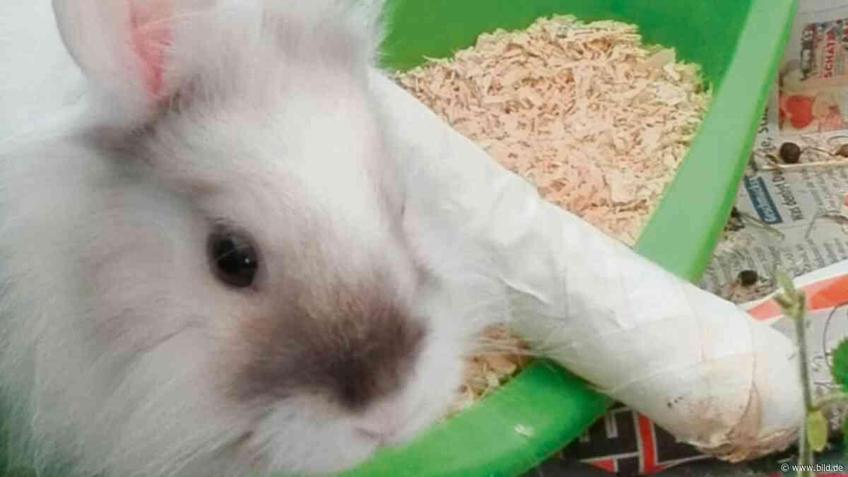 Meerbusch (NRW): Kaninchen mit gebrochenem Bein ausgebüxt - BILD