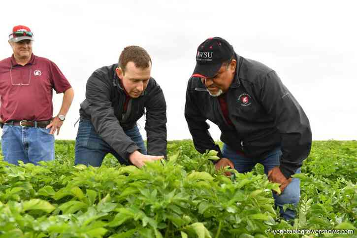WSU seeks first Endowed Chair in Soil Health for Potato Cropping Systems