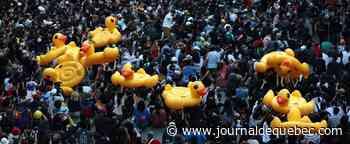 Des canards gonflables, symboles des manifestations pro-démocratie en Thaïlande