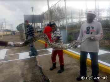 Vecinos localizan serpiente en subestación eléctrica de Ciudad Ojeda - El Pitazo