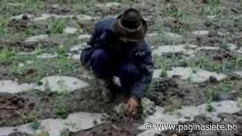 Granizo afectó más de 450 hectáreas de cultivos en Betanzos - Pagina Siete