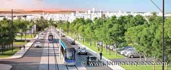 Tramway: une chaire de recherche pour préserver les arbres urbains