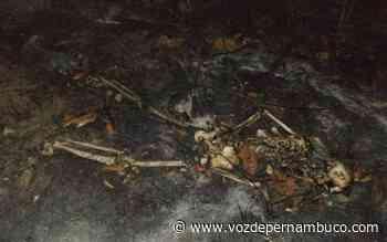 Ossada humana é encontrada na zona rural de Carpina - Voz de Pernambuco