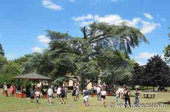 Yvelines : et si le cèdre de Montesson était le plus bel arbre de France ? - Le Parisien