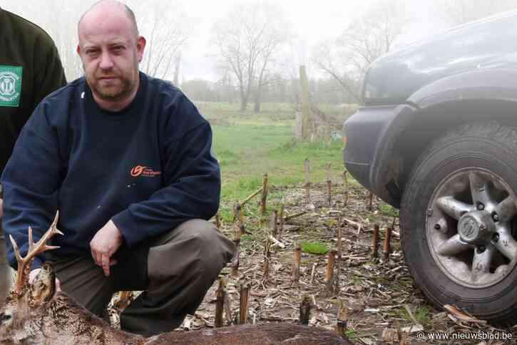 De boswachter die echt stroper werd: jachtopzichter in uniform betrapt terwijl hij clandestien op reeën joeg