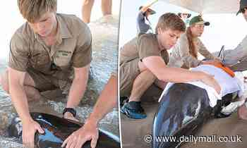 Robert Irwin, 16, is rushes to the aid of a melon-headed whale left stranded on Noosa Shore