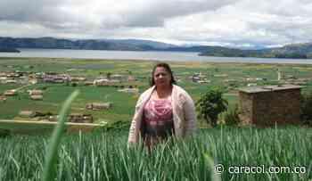 En crisis cultivadores de cebolla del municipio de Aquitania - Caracol Radio