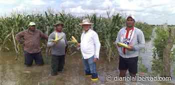 Campesinos de Campo de la Cruz, lo más damnificados por pérdida de más de 438 hectáreas de cultivos - Diario La Libertad