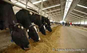 Innovación láctea: desde el tambo robótico más grande del mundo hasta un sistema de ordeño de 24 horas al día - Agrofy News
