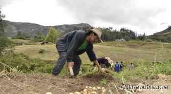La Libertad: estiman un 80% de pérdidas para agricultores del valle Chicama LRND - LaRepública.pe