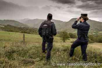 Vibo Valentia: preoccupa il fenomeno incendi boschivi - Calabria Magnifica