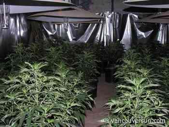 Cannabis grow-op near Merritt busted, 16 under arrest
