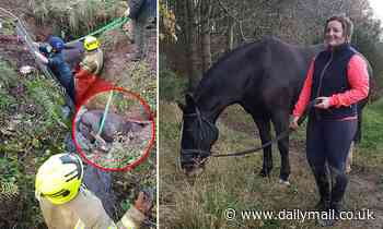 Horse becomes trapped in trench but now in stable condition after rescuers free him
