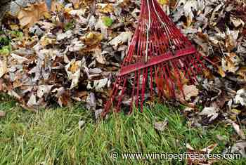 Leaf it to wonderful neighbours to help out during trying time