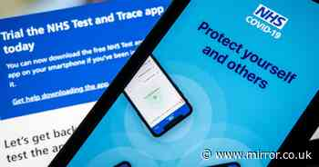 'Sickening' Test and Trace text scam is circulating - what to do if you get it
