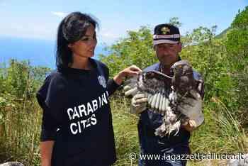 Carabinieri, presentato il Calendario Cites 2021 » La Gazzetta di Lucca - La Gazzetta di Lucca