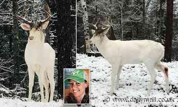 'His majesty!' Wisconsin woman spots stunning albino buck in her backyard