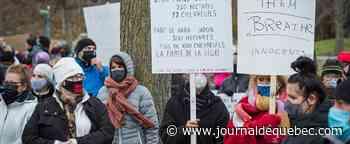 La Ville de Longueuil jugée seule responsable de l'abattage des cerfs