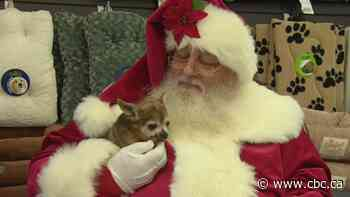 In B.C.'s malls, pet shops and more, visits with Santa Claus are being St. Nixed