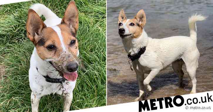Dog who was given days to live shocks everyone by still being alive 18 months later