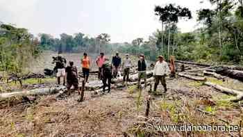 Constatan tala ilegal en bosques de Huicungo - DIARIO AHORA