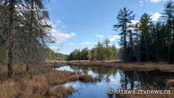 Ottawa weather: Warm temperatures heading into the weekend - CTV News Ottawa