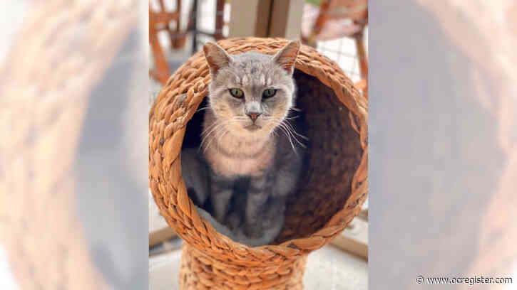 Tabby cat Jack would love to cozy up with you
